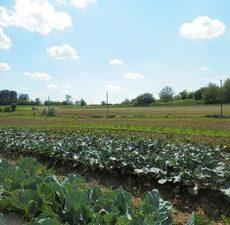 Ekološka poljoprivreda i ruralni razvoj