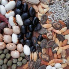 Hrvatska drastično ograničava uzgoj domaćeg sjemena čak i za vlastite potrebe gospodarstva