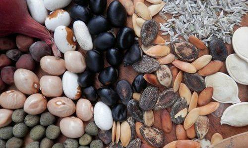 Čuvajmo domaće sorte i pokrenimo ekološko sjemenarstvo – poručuju ekološki proizvođači