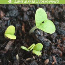 Zakon o sjemenu – značajna poboljšanja